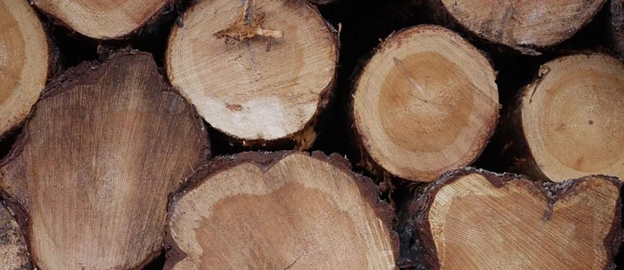 Beneficios-madera-fuego